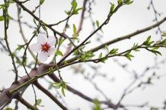 Eenzame bloem op een boom in de tuin Stock Fotografie