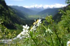 Eenzame bloemen Stock Fotografie