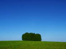 Eenzame bomen Royalty-vrije Stock Afbeelding