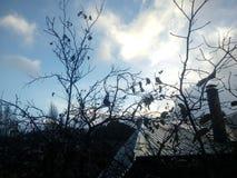 Eenzame bomen in de middag stock foto