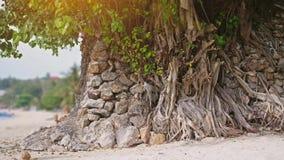 Eenzame bomen die dichtbij de kust op tropisch strand bij zonsondergangzonneschijn groeien Langzame Motie 3840x2160 stock video