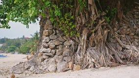 Eenzame bomen die dichtbij de kust op tropisch strand groeien Langzame Motie 3840x2160 stock footage