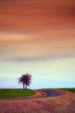 Eenzame bomen naast een weg Stock Foto's