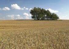 Eenzame bomen op gebied Stock Fotografie