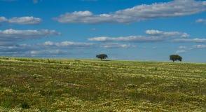 Eenzame bomen op gebied Stock Foto