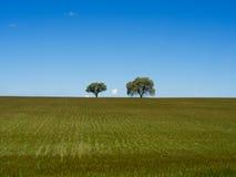 Eenzame bomen op groen gebied op gebied Stock Afbeelding