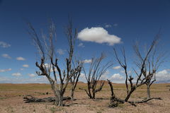 Eenzame bomen in Ouarzazate Royalty-vrije Stock Foto's