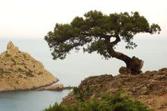 Eenzame boom? Royalty-vrije Stock Afbeeldingen