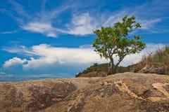 Eenzame boom Royalty-vrije Stock Foto's