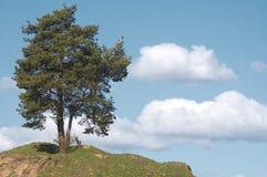 Eenzame boom. Royalty-vrije Stock Foto