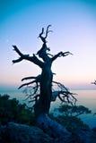 Eenzame boom Royalty-vrije Stock Fotografie