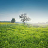 Eenzame boom Royalty-vrije Stock Afbeeldingen