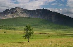 Eenzame boom. Royalty-vrije Stock Fotografie