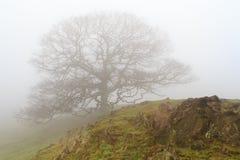 Eenzame boom Stock Afbeeldingen