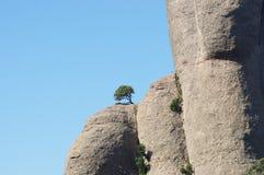 Eenzame boom Stock Foto