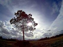 Eenzame boom royalty-vrije stock foto