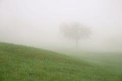 Eenzame boom achter een heuvel in de mist Stock Afbeeldingen