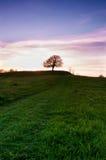 Eenzame boom agains de zonsondergang Royalty-vrije Stock Foto