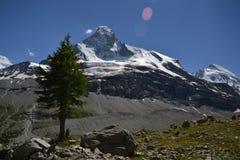 Eenzame boom in bergen Royalty-vrije Stock Afbeelding