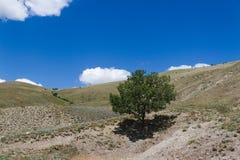 Eenzame boom in bergheuvel Royalty-vrije Stock Foto's