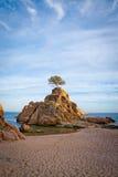 Eenzame boom bij de bovenkant van de rots Stock Afbeelding