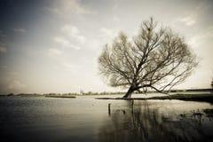 Eenzame boom bij meer Royalty-vrije Stock Foto's