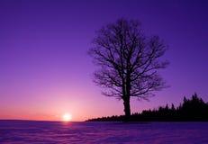 Eenzame boom bij zonsondergang Royalty-vrije Stock Foto's