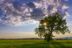 Eenzame boom bij zonsondergang Stock Afbeeldingen