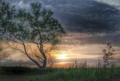 Eenzame boom bij zonsondergang Stock Foto