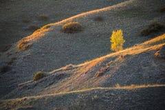 Eenzame Boom bij Zonsondergang Stock Afbeelding