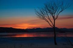 Eenzame boom bij zonsondergang van de dag Royalty-vrije Stock Fotografie
