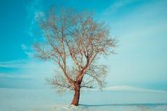 Eenzame boom, blauwe hemel, de winter stock afbeelding