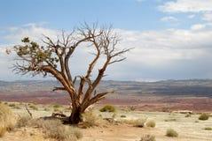 Eenzame boom buiten Zion National Park Stock Afbeelding