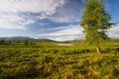 Eenzame boom in de bergen stock foto