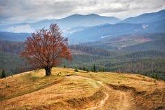 Eenzame boom in de herfstbergen Bewolkte dalingsscène Stock Foto