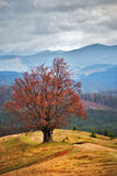 Eenzame boom in de herfstbergen Bewolkte dalingsscène Royalty-vrije Stock Afbeeldingen