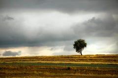 Eenzame boom in de herfstlandschap Royalty-vrije Stock Fotografie