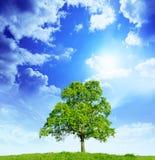 Eenzame boom in de lente Royalty-vrije Stock Afbeeldingen
