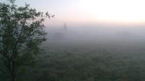 Eenzame boom in de mist stock videobeelden