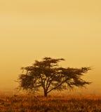 Eenzame boom in de mist Stock Foto