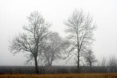 Eenzame boom in de mist Stock Afbeelding