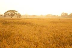 Eenzame boom in de mist, het seizoen van de aardherfst Royalty-vrije Stock Foto's