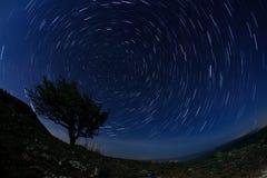 Eenzame boom in de nachthemel met het bewegen van sterren Royalty-vrije Stock Afbeelding