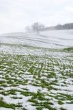 Eenzame boom in de sneeuw Stock Foto's
