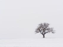 Eenzame Boom in de sneeuw Stock Afbeeldingen
