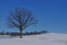 Eenzame boom in de sneeuw van de heuvel Stock Afbeeldingen