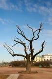 Eenzame boom in de stad tegen de blauwe hemel Heilige-Petersburg Royalty-vrije Stock Afbeelding