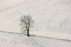 Eenzame boom in de winter Stock Foto's