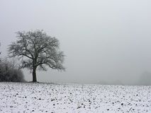 Eenzame boom in de wintermist Dauw op het hout tijdens een koud weekend wordt berijpt dat Genomen in Hohenwettersbach, Duitsland royalty-vrije stock foto's