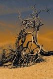 Eenzame boom in de woestijn, het Nationale Park van de Doodsvallei royalty-vrije stock fotografie